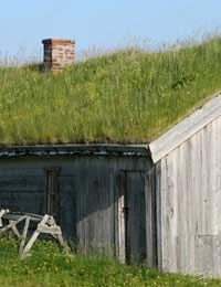 A green roof for the chicken coop!