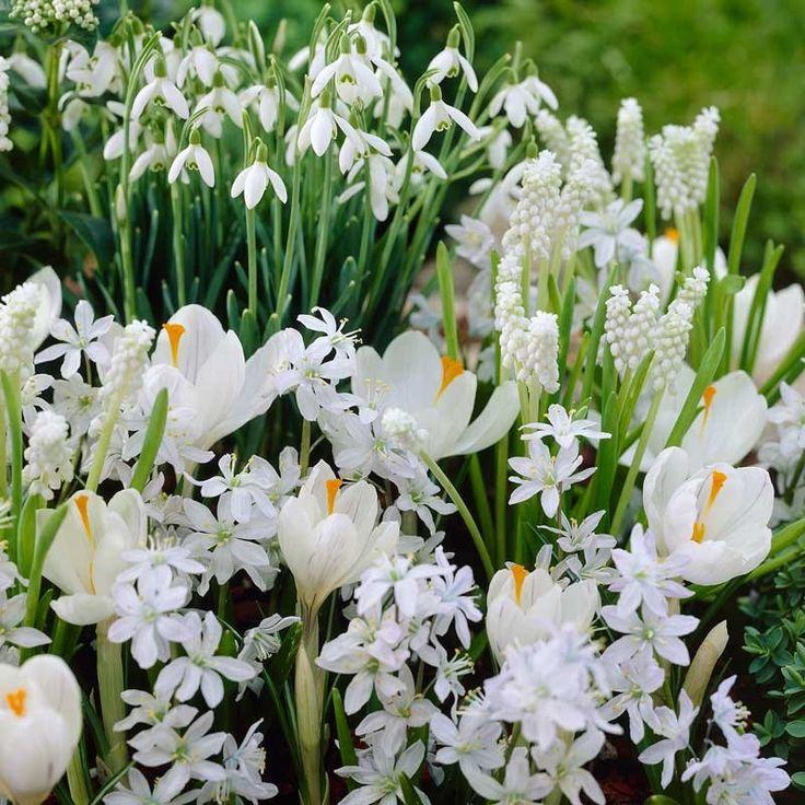 71 besten Meadow lawn Bilder auf Pinterest | Blumensamen ...
