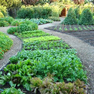 Country Vegetable Garden Ideas 47 best vegetable garden ideas images on pinterest | garden ideas