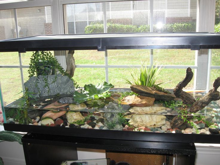 13 best fire bellied toad images on pinterest fish for Fish tank fireplace