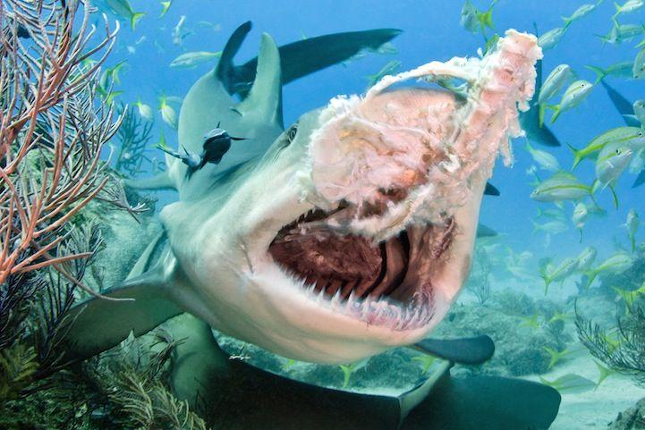 Todd Bretl Fotógrafo britânico captura imagens incríveis de tubarões nas Bermudas