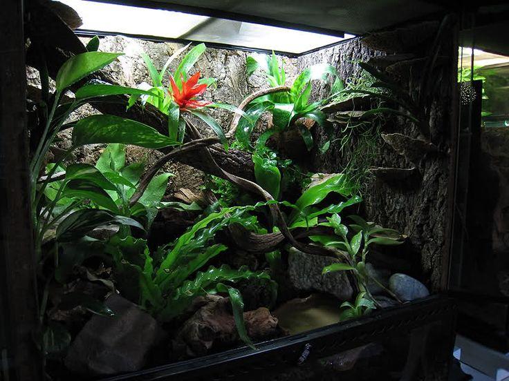 78 best images about fish tank paludarium vivarium on for Fish tank frogs