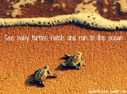 See turtles hatch... Or even lay eggs... Lived in Florida my whole life and never seen this!