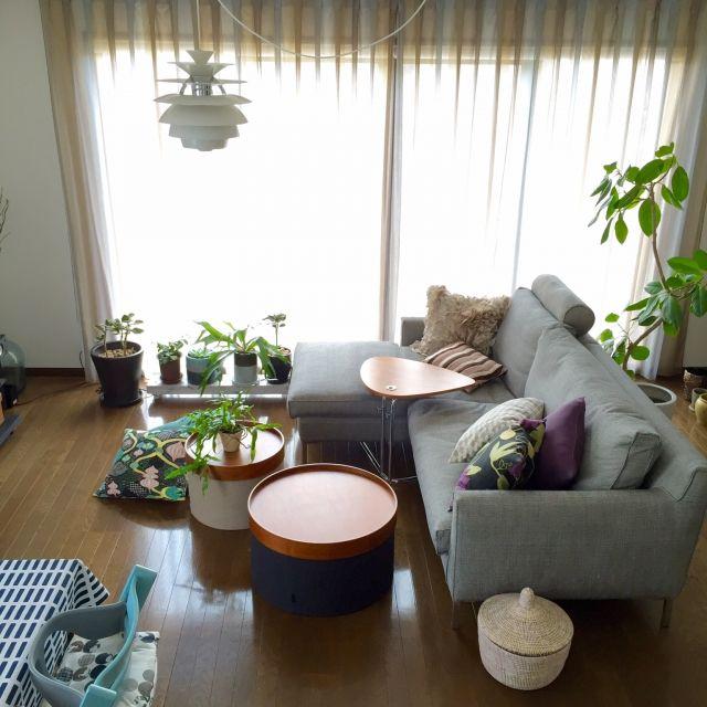 beneyさんの、Lounge,観葉植物,植物,クッション,多肉植物,ルイスポールセン,北欧インテリア,アクタス,アイラーセン,ミックスインテリア,植物のある暮らし,エバーフレッシュ療養中についての部屋写真