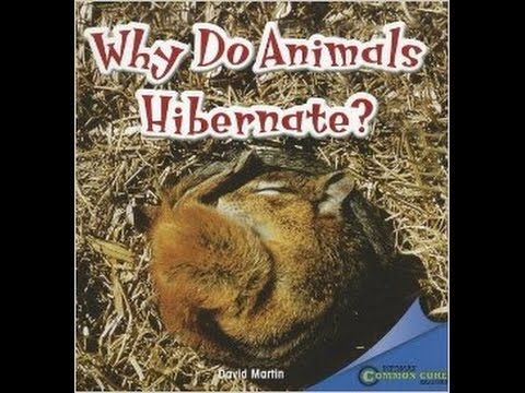 Why Do Animals Hibernate? Read Aloud Along Educational Story Book for Ch...