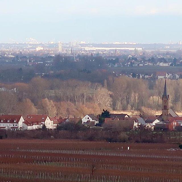 Vineyard walk with view over Ruppertsberg. . . . #vineyard #vineyardwalk #view #pfalz #weinstrasse #ruppertsberg #hofstück #reiterpfad #weinlage #weinberg #wein #tyskaviner #pfalzliebe #vineyardlover #winelover #pfalzlover #rieslinglover #riesling #germanwines #winesofgermany #pfalzwein #pfalzliker #canong7xmarkii #pfalzweinproben #fromlarssonwithlove