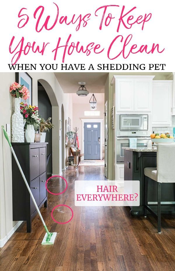 Worried About Dog Hair Everywhere Don T Let That Stop You From Adopting A Pet Here Are 5 Tips For Keeping The Clean House House Cleaning Tips Cleaning Hacks