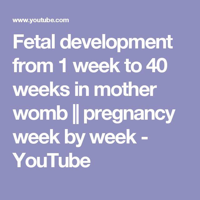 Fetal development from 1 week to 40 weeks in mother womb    pregnancy week by week - YouTube