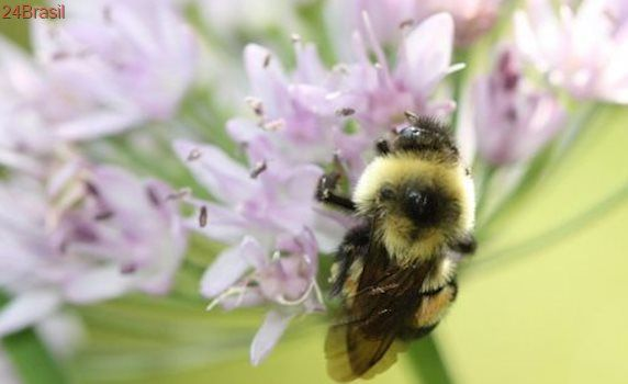 Pesticidas prejudicam 97% das espécies ameaçadas de extinção