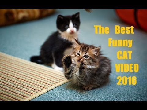 Funny Cats Compilation [Must See] Funny Cat Fail Videos Ever № 27 - Приколы с котами № 27 - http://positivelifemagazine.com/funny-cats-compilation-must-see-funny-cat-fail-videos-ever-%e2%84%96-27-%d0%bf%d1%80%d0%b8%d0%ba%d0%be%d0%bb%d1%8b-%d1%81-%d0%ba%d0%be%d1%82%d0%b0%d0%bc%d0%b8-%e2%84%96-27/ http://img.youtube.com/vi/p-3UYjz3q9g/0.jpg  The Best Funny Cats and Fail VIDEOS Watch this funny cat video and you will never leave your cat home alone again :p S