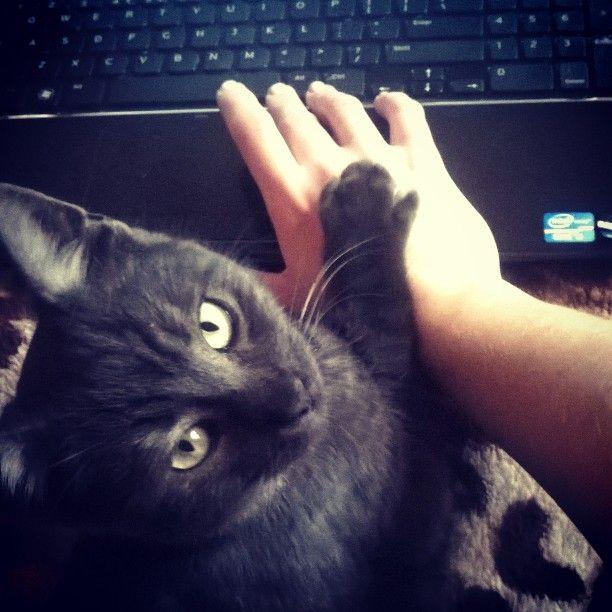 #Cat  #kitty #instacat #today #picoftheday #Lumia635