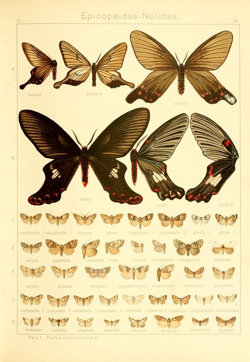 wapiti3: The Macrolepidoptera of the Earth: a systematic...