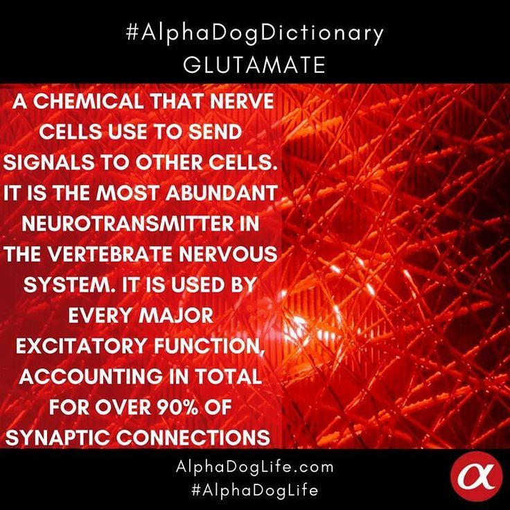 #WordOfTheDay #AlphaDogDictionary  In #neuroscience, #glutamate generally refers to the anion of glutamic acid in its role as a neurotransmitter: a #chemical that nerve cells use to send signals to other cells. It is by a wide margin the most abundant #neurotransmitter in the #vertebrate nervous system. It is used by every major excitatory function in the #vertebrate brain, accounting in total for well over 90% of the synaptic connections in the human brain.