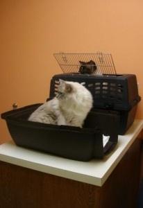 atlantic county animal shelter