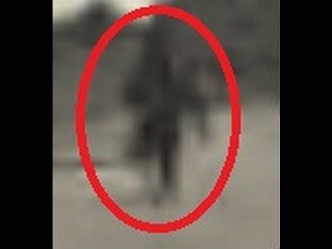 Bigfoot Evidence: Breaking: Someone Just Took Photographs of Bigfoot Climbing a Tree