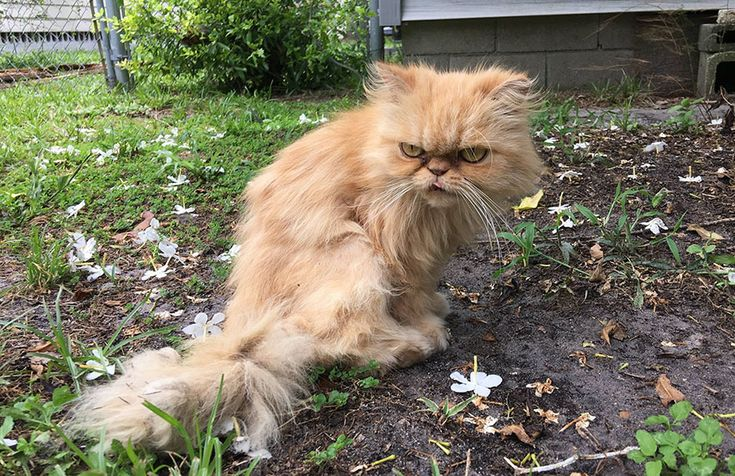 "Gato abandonado com ""cara"" de poucos amigos é adotado... mas será que gostou? | Tá Bonito"