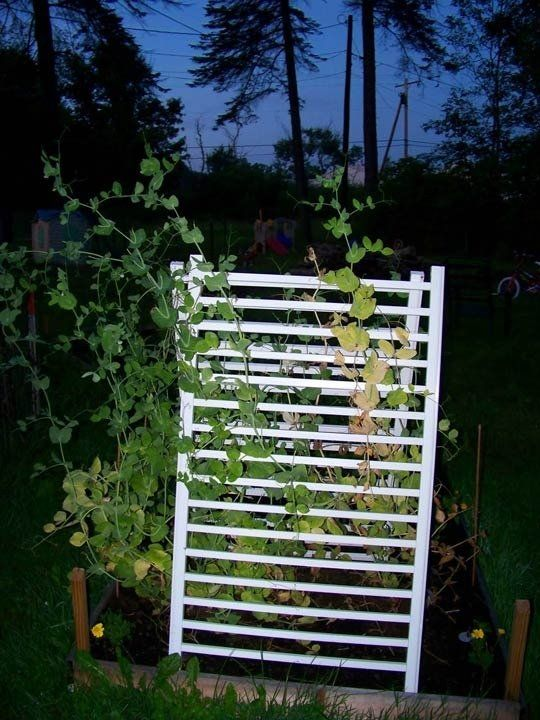 Reusing Cribs and Baby Gates as Garden Trellises | Apartment Therapy