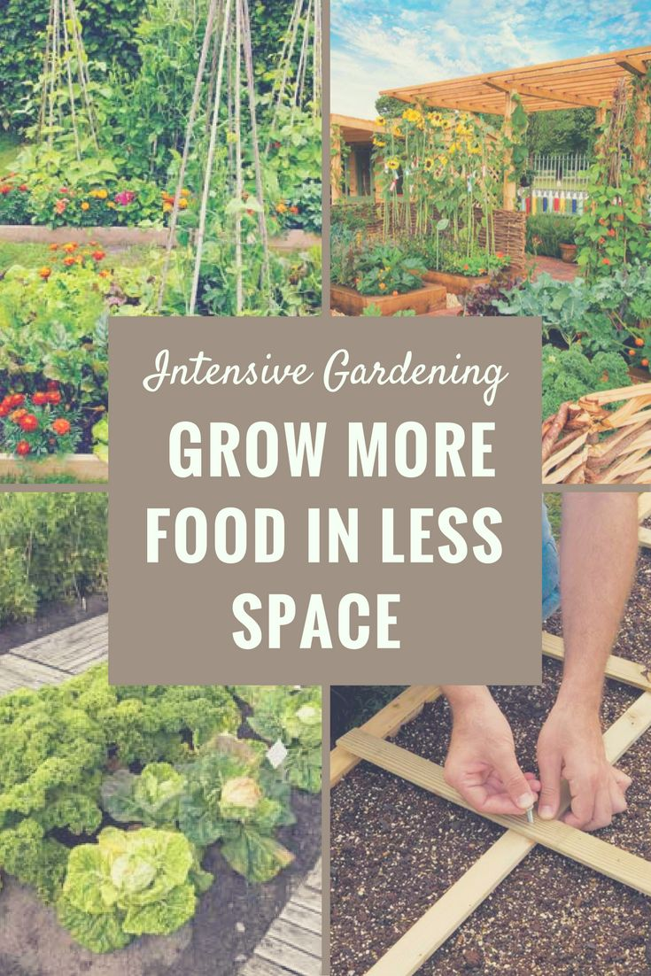 Blend the best principles of biointensive gardening and square-foot gardening to devise a customized, highly productive intensive gardening system.