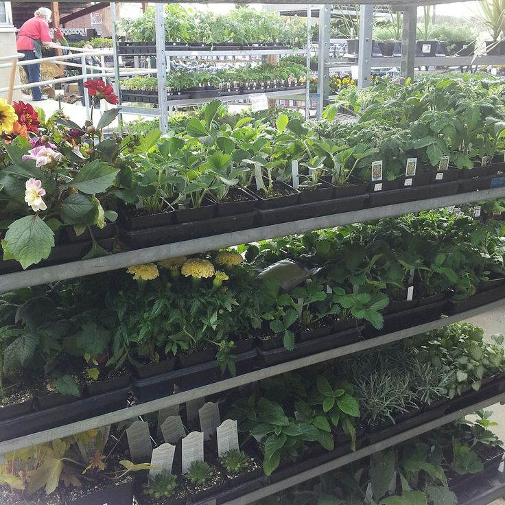 Plants in our nursery at Sprague and Altamont
