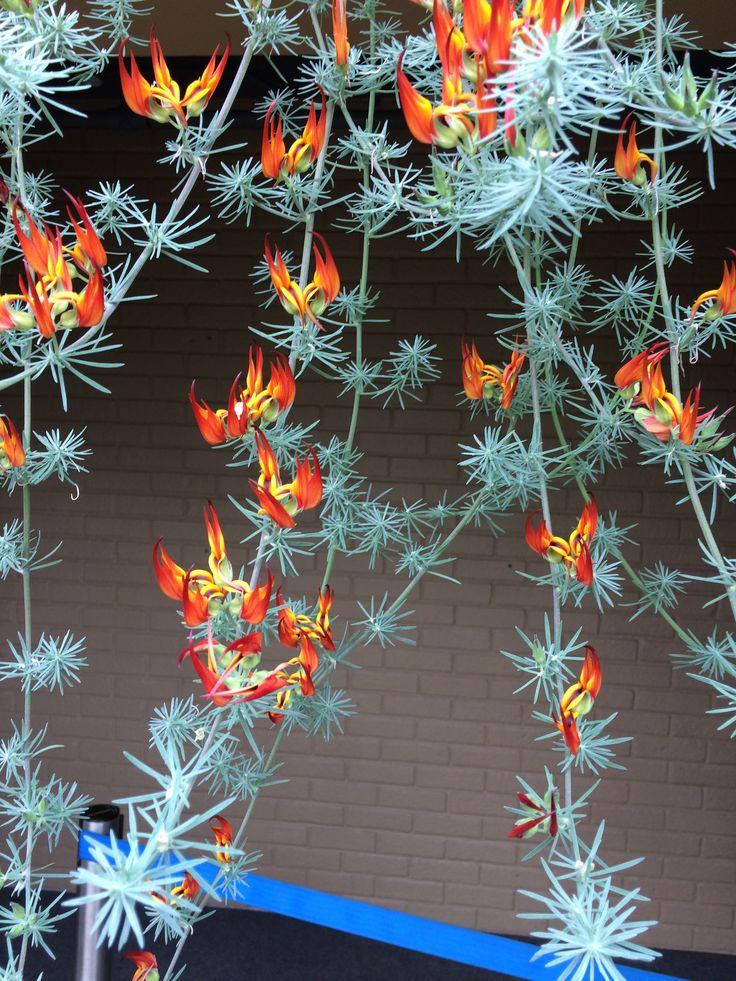 Starlit flower