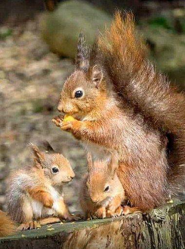 Mama training her babies! :)
