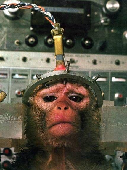 Experimentación con animales - Viviseccion - LIBERA!
