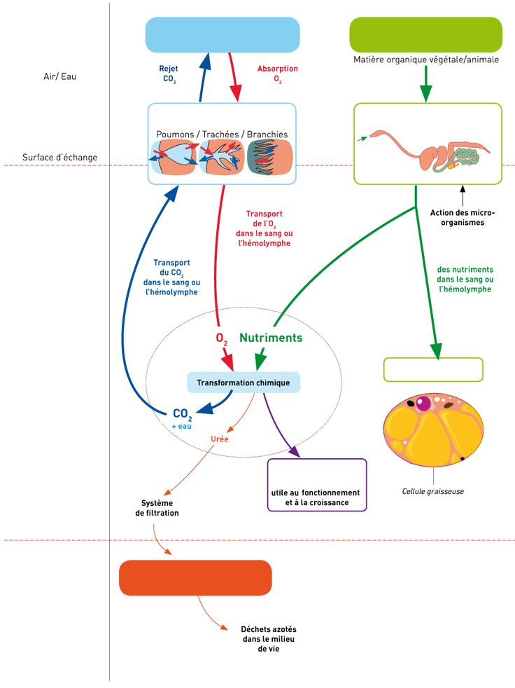 SVT Cycle 4 – Exercices interactifs | schema bilan svt ...