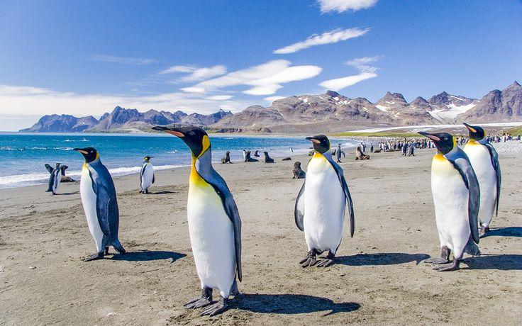 #Reise #To-#Do #Liste: 5. #Patagonien, #Argentinien: #Pinguinen die #Hand schütteln © shutterstock