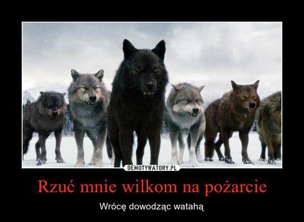 Rzuć mnie wilkom na pożarcie – Wrócę dowodząc watahą