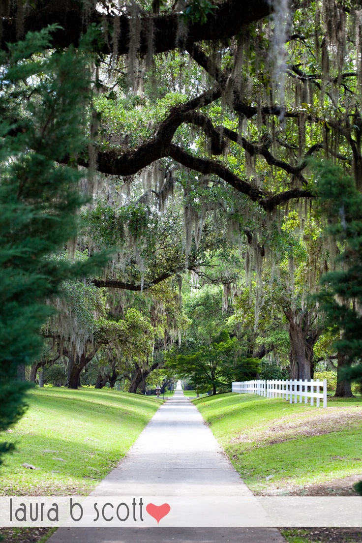 17 Best Images About South Carolina On Pinterest Park In
