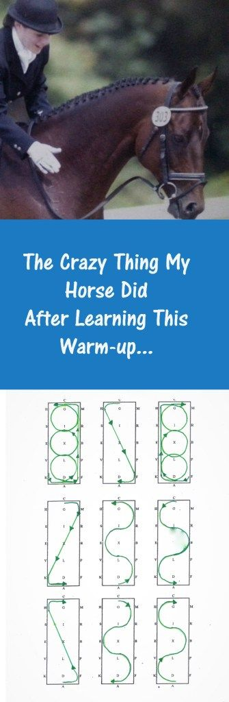 THE CRAZY THING MY HORSE DID AFTER LEARNING THIS WARM UP - BRAID SECRETS