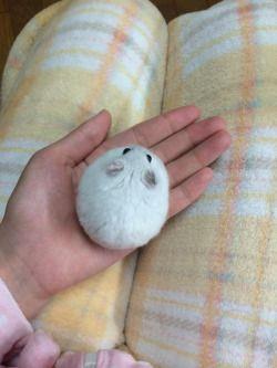 Hamster in hand.