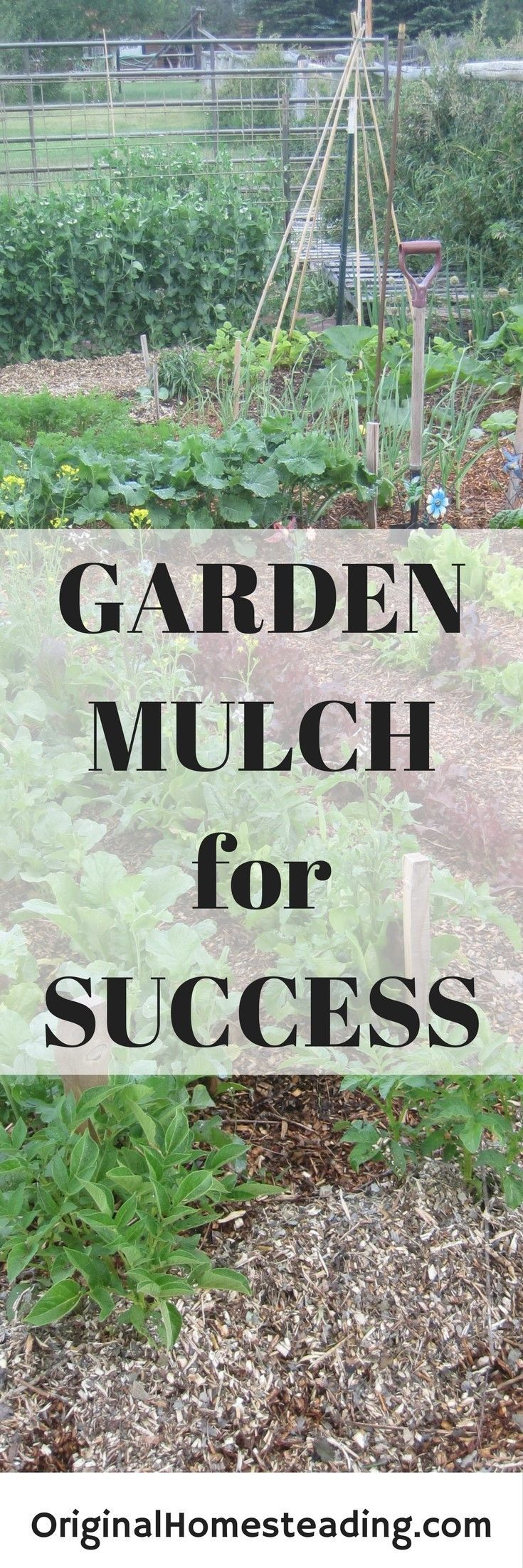 Mulch your Garden for Success. Mulch helps suppress weeds, retain moisture and increase yields.....give it a try!!!