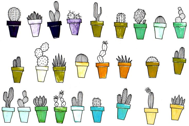 cactus collection   Flickr - Photo Sharing!