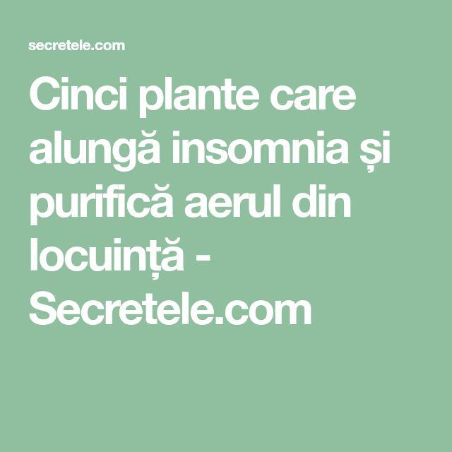 Cinci plante care alungă insomnia și purifică aerul din locuință - Secretele.com
