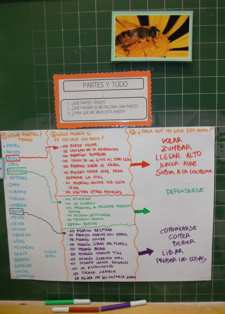 Destrezas de Pensamiento: Partes y todo Ejemplo de uso en Educación Infantil