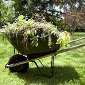 Eviter le développement des mauvaises herbes
