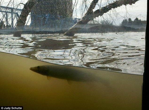 See the fish swimming by the window the grand river for Grand river fishing