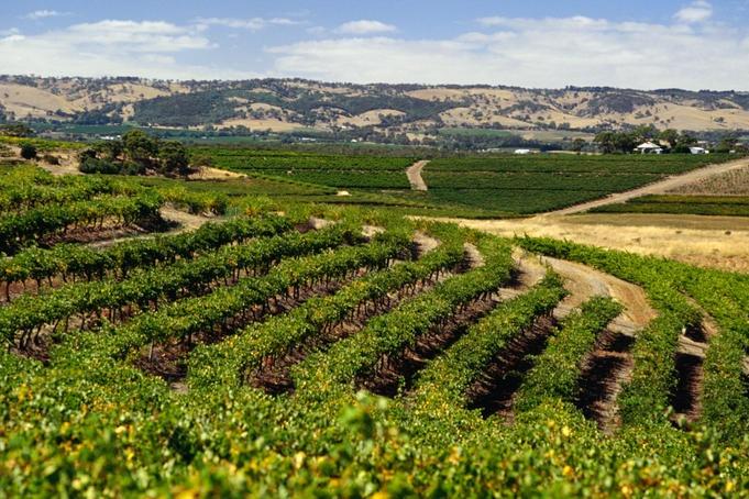 Vineyards, South Australia