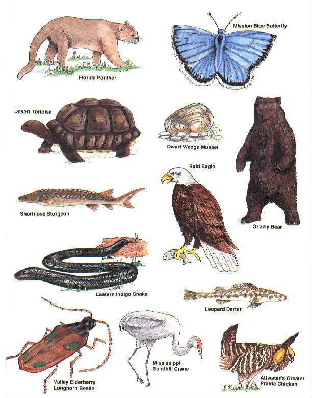 colored pictures of endangered species Animals: Art