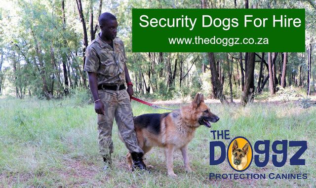Security dogs for hire. Well-trained security dogs available for hire from The Doggz.