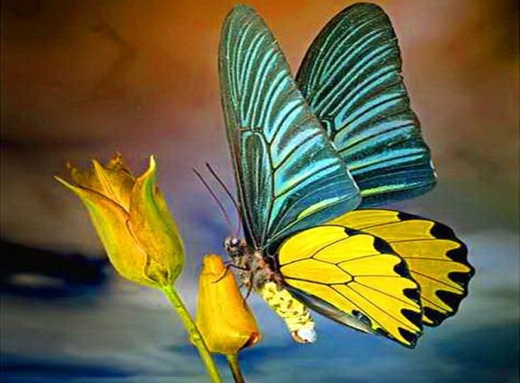 butterfly on yellow color - photo #8