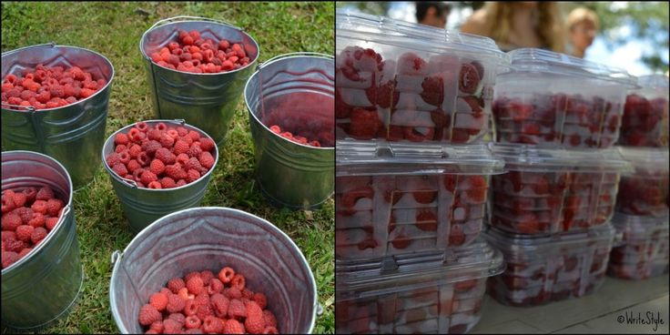 Just Darling - Berry Picking