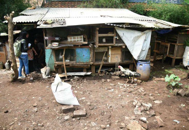 Kisah Miris Abah Tarsa, Hidup di �Kandang Ayam� Ditemani Kucing