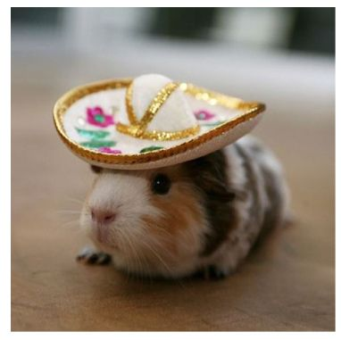 cute animals in Mexican hats might be my new favorite thing.