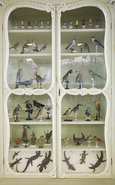bonnier de la mosson's cabinet of natural history, paris.