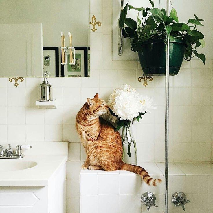 отличного утра, друзья! @themissmisan_decor #galleria_arben #decoration #ванная #designinterior #interior #cat #кот