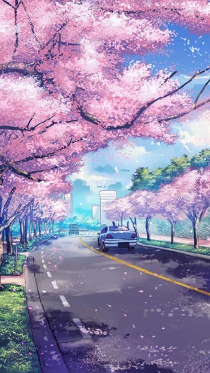 Painting Car Pathway Phone Wallpaper Pink Blooming Trees Over Road Free Spring Wall In 2020 Anime Scenery Wallpaper Anime Backgrounds Wallpapers Iphone Wallpaper Japan