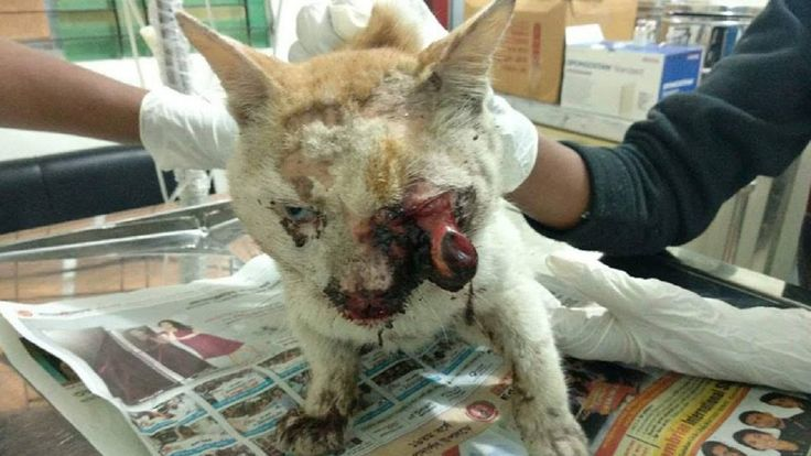 Poor Cat rescued from Street with Horror Situation and ensures Treatment