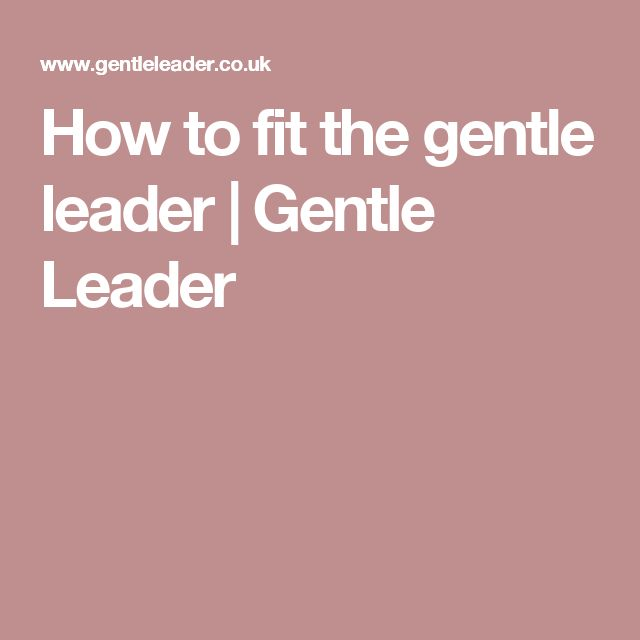 How to fit the gentle leader | Gentle Leader